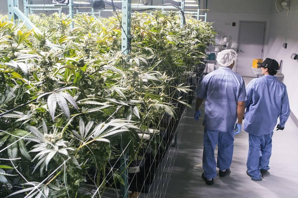 Технической разрешение конопли выращивание на марихуана скачать песню линда